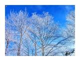 Деревья Фотограф: alexei1903  Просмотров: 1157 Комментариев: 0