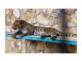 Название: IMG_7777 Фотоальбом: сафари-парк львов(крым) Категория: Животные  Просмотров: 1141 Комментариев: 0
