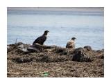 Белохвостые орланы  Просмотров: 614 Комментариев: 0