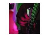*цвет музыки* / marka 2008  Просмотров: 610 Комментариев: 0