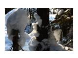 Название: В лесном сумраке.. Фотоальбом: ЗИМА .. уже перед самым мартом.. Категория: Природа Фотограф: vikirin  Просмотров: 1431 Комментариев: 0
