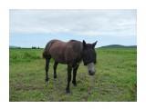 Только так можно спасти бедное животное, от слепней и мух! Накидка надета, но лошадь видит все!  Фотограф: viktorb  Просмотров: 961 Комментариев: 0