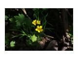 Что на речке цветет... Фотограф: vikirin  Просмотров: 1677 Комментариев: 0