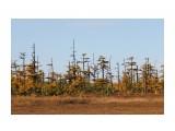 негустой лес Фотограф: vikirin  Просмотров: 652 Комментариев: 0