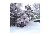 В снегу.. Фотограф: vikirin  Просмотров: 2394 Комментариев: 0