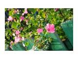 Цветы.  Просмотров: 1006 Комментариев: 0
