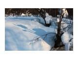 Синие тени - к весне.. Фотограф: vikirin  Просмотров: 2228 Комментариев: 0
