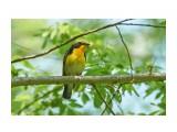 Птички  DSC08409   Просмотров: 73  Комментариев: 0