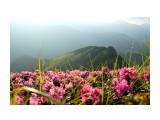 Название: Весна в Карпатах. Фотоальбом: Природа Категория: Природа  Просмотров: 40 Комментариев: 0