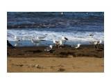 Название: Чайки почти ручные... рядом и не боятся Фотоальбом: 2013 09 У моря... Чайки... Категория: Животные Фотограф: vikirin  Время съемки/редактирования: 2013:09:02 10:26:34 Фотокамера: Canon - Canon EOS Kiss X3 Диафрагма: f/16.0 Выдержка: 1/1000 Фокусное расстояние: 55/1    Просмотров: 1513 Комментариев: 0