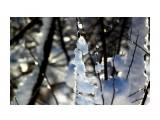 Зимний лес.. декабрь...  Фотограф: vikirin  Просмотров: 1562 Комментариев: 0