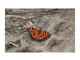 На песке... Фотограф: vikirin  Просмотров: 2143 Комментариев: 0