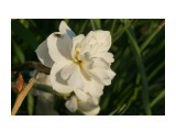 DSC07250 Фотограф: vikirin  Просмотров: 569 Комментариев: 0