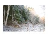 IMGP2655 Зимный лес! Первый снег! 30.10.jpg сах Фотограф: viktorb  Просмотров: 876 Комментариев: 0