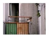 Название: местный житель Фотоальбом: остров Парамушир Категория: Животные  Время съемки/редактирования: 2012:09:15 09:41:29 Фотокамера: NIKON - COOLPIX S3100 Диафрагма: f/6.5 Выдержка: 10/600 Фокусное расстояние: 27600/1000    Просмотров: 1596 Комментариев: 0