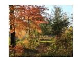 Название: осень Фотоальбом: парк Категория: Природа  Время съемки/редактирования: 2016:10:16 19:23:43 Фотокамера: Canon - Canon EOS 600D Диафрагма: f/7.1 Выдержка: 1/125 Фокусное расстояние: 18/1    Просмотров: 304 Комментариев: 0