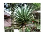 Название: Алоэ Фотоальбом: Тропические растения Азии Категория: Туризм, путешествия  Время съемки/редактирования: 2015:04:30 17:37:42 Фотокамера: Canon - Canon EOS 400D DIGITAL Диафрагма: f/5.0 Выдержка: 1/160 Фокусное расстояние: 40/1    Просмотров: 490 Комментариев: 0