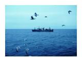 Охотское море спокойно   Фотограф: 7388PetVladVik  Просмотров: 5811 Комментариев: 0