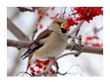 Птицы  DSC08545_нн   Просмотров: 220  Комментариев: 3