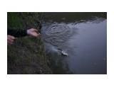 Случайная рыбалка, закинули - каак давай клевать.. Фотограф: vikirin  Просмотров: 810 Комментариев: 0