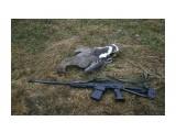 Название: 3218940 Фотоальбом: охота с сайгой Категория: Рыбалка, охота  Просмотров: 741 Комментариев: 0