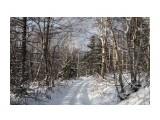 Название: IMG_4374 Фотоальбом: Зимний лес Категория: Природа Фотограф: Region_65  Время съемки/редактирования: 2012:12:01 17:15:38 Фотокамера: Canon - Canon EOS 50D Диафрагма: f/8.0 Выдержка: 1/200 Фокусное расстояние: 24/1    Просмотров: 1101 Комментариев: 0