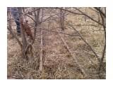 сохранившийся кусочек линии Поронайск-Тихменево (9мая 2009г)  Просмотров: 644 Комментариев: