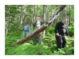 Поваленное дерево в лесу! Устал, склонился, я на ствол, чуть чуть! Фотограф: viktorb  Просмотров: 1093 Комментариев: 0
