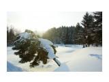 Название: DSC03273_новый размер Фотоальбом: Фирсово 19 января 2014 Категория: Природа Фотограф: В.Дейкин  Просмотров: 1592 Комментариев: 0