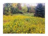 Название: 3BF77CDC-B136-466D-8D4D-6C84EDF709FD Фотоальбом: Ботанический сад Категория: Природа  Время съемки/редактирования: 2018:09:28 15:34:22 Фотокамера: Apple - iPhone 6s Диафрагма: f/2.2 Выдержка: 1/100 Фокусное расстояние: 83/20    Просмотров: 343 Комментариев: 0