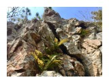 Название: :) Фотоальбом: Pink stones garden Категория: Природа  Время съемки/редактирования: 2018:04:29 11:49:19 Фотокамера: Apple - iPhone 6s Диафрагма: f/2.2 Выдержка: 1/541 Фокусное расстояние: 83/20    Просмотров: 520 Комментариев: 0