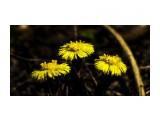 Название: _MG_0549 Фотоальбом: Цветы Категория: Цветы Фотограф: vit781  Просмотров: 308 Комментариев: 0