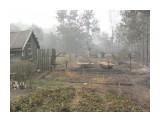 после пожара 3 авг. 2010 г. Подмосковье 2010 г.  Просмотров: 127 Комментариев: