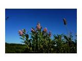 DSC09393 Фотограф: vikirin  Просмотров: 365 Комментариев: 0
