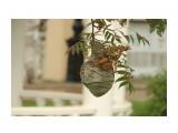 осиное гнездо  Просмотров: 9 Комментариев: