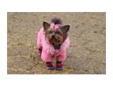 Название: Модница Фотоальбом: собаки Категория: Животные  Время съемки/редактирования: 2019:11:02 08:12:09 Фотокамера: Canon - Canon EOS 1200D Диафрагма: f/5.6 Выдержка: 1/800 Фокусное расстояние: 62/1    Просмотров: 274 Комментариев: 0
