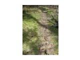 Все в Природе, на своих местах! Фотограф: viktorb Лесная тропинка к развилке вверх по Уюновке, окр. Южно-Сахалинска!  Просмотров: 1444 Комментариев: 0