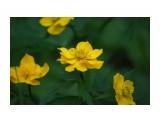 Что цветет на речке.. Фотограф: vikirin  Просмотров: 1753 Комментариев: 0