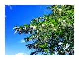 Тополиный пух.. Фотограф: alexei1903  Просмотров: 1420 Комментариев: 0