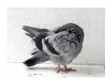 Название: гигиена Фотоальбом: мой птичник на балконе Категория: Животные  Время съемки/редактирования: 2011:09:12 11:41:27 Фотокамера: OLYMPUS IMAGING CORP.   - SP570UZ                 Диафрагма: f/4.3 Выдержка: 10/1250 Фокусное расстояние: 2554/100 Светочуствительность: 100  Описание: пёрышки чистит.  Просмотров: 723 Комментариев: 0