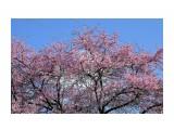 Весна Кубани Фотограф: gadzila  Просмотров: 395 Комментариев: 0