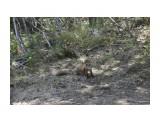 Название: Лиса_1 Фотоальбом: Животные среди нас Категория: Животные Фотограф: А.Репин  Время съемки/редактирования: 2020:05:31 13:23:09 Фотокамера: NIKON CORPORATION - NIKON D810 Диафрагма: f/6.3 Выдержка: 10/1600 Фокусное расстояние: 1350/10    Просмотров: 146 Комментариев: 0