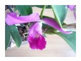 P1130259 второй цветочек с ровной окраской  Просмотров: 10 Комментариев: