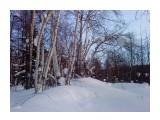 В лесу перед закатом... Фотограф: vikirin  Просмотров: 3147 Комментариев: 0