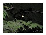 Луна  Просмотров: 1268 Комментариев: