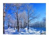 Деревья Фотограф: alexei1903  Просмотров: 1177 Комментариев: 0