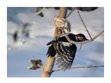 Название: Обед закончен Фотоальбом: Птицы Категория: Животные  Время съемки/редактирования: 2017:01:26 11:23:30 Фотокамера: SONY - DSC-HX300 Диафрагма: f/6.3 Выдержка: 1/250 Фокусное расстояние: 21500/100    Просмотров: 44 Комментариев: 1