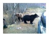 Название: 22102011170 Фотоальбом: Разное Категория: Животные  Фотокамера: Nokia - C5-00 Диафрагма: f/2.4 Выдержка: 30011/1000000 Фокусное расстояние: 330/100    Просмотров: 3098 Комментариев: 0