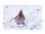 Название: _DSC6456 Фотоальбом: Птички Категория: Животные Фотограф: VictorV  Время съемки/редактирования: 2021:02:01 19:00:04 Фотокамера: SONY - ILCA-77M2 Диафрагма: f/5.0 Выдержка: 1/400 Фокусное расстояние: 4000/10    Просмотров: 35 Комментариев: 0