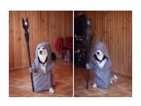 Название: Пёс в дозоре. Фотоальбом: Живности. Псинки. Категория: Животные  Просмотров: 98 Комментариев: 0